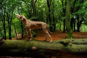 In balans van Mogi Hondenfotografie