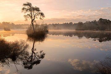 Morgenstond van Hans Vellekoop