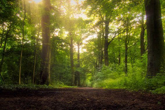 Gouden bos van Arjen Roos