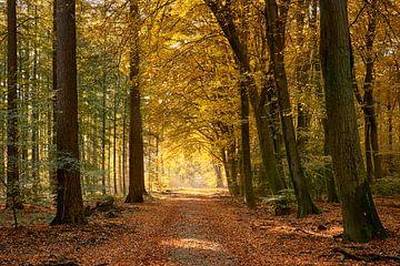 Bunter Waldweg im Herbst von Cor de Hamer