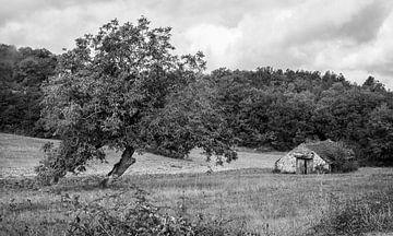 Walnussbaum und Schäferhütte Dordogne Périgord Noir von tovano.pictures