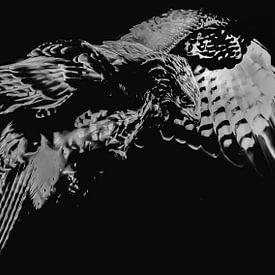 Roofvogel van Hennie Zeij