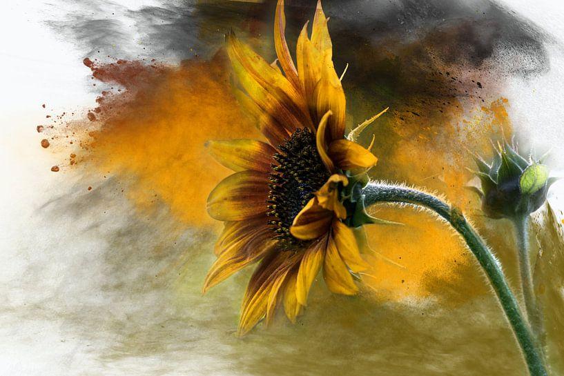 Sunflower van Harry Stok