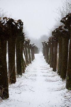 Wintermagic van Ingrid de Vos - Boom