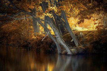 Feuersee von Kees van Dongen