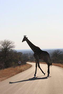 Giraffe met schaduw in 50 km zone von Irene de Moree