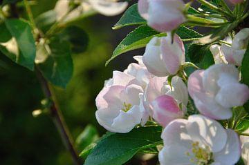 bloemen van Fred van den Brink