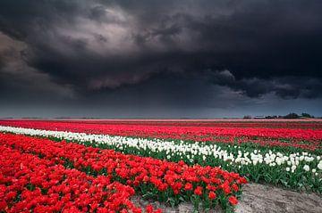 Dramatic stormy sky over tulip field van