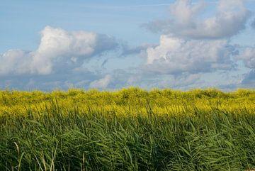 Blauw, geel en groen (2). von Bas Smit