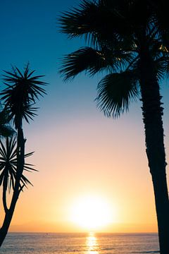 Prachtige silhouette foto van bomen op Tenerife van