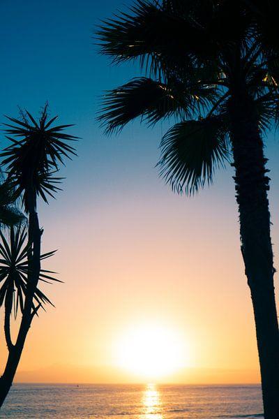 Prachtige silhouette foto van bomen op Tenerife van Natascha Teubl