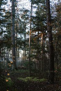 Ochtend licht in het bos van Wianda Bongen