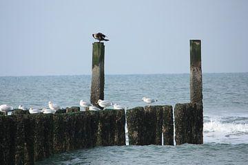 loving birds van nikita van der Starre- Zagers