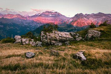 Roze Alpen van Mojca Osojnik