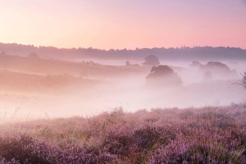 Een mistige ochtend op de heide van Monique van Genderen (in2pictures.nl fotografie)