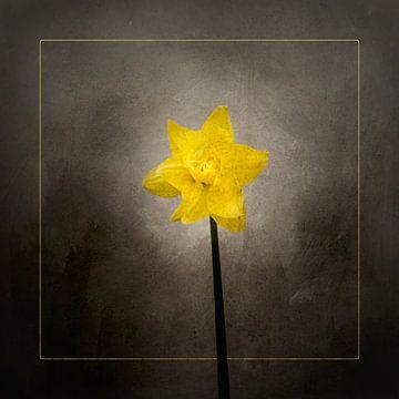 Frühjahrsblüher - Das Osterglöckchen | Vintage-Stil gold von Melanie Viola