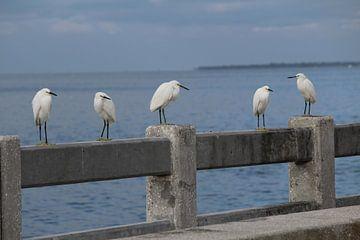 Vogels in St. Pietersburg Florida van Martin van den Berg Mandy Steehouwer