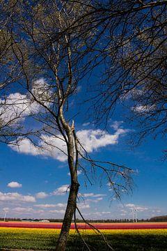 Tulpenveld van Patrick Ruitenbeek