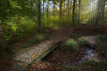 Houten brug in het herfstbos van Dieter Beselt