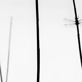 minimalistische korenbout van Francois Debets