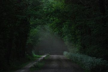 Darkgreen von Jenny de Groot
