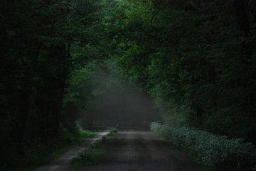 Darkgreen sur Jenny de Groot