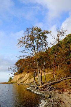 Boddenküste van Ostsee Bilder