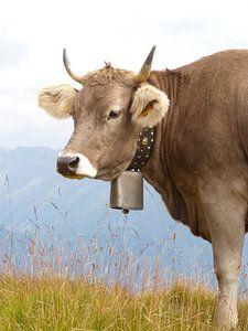 Zwitserse Alpen koe met bel