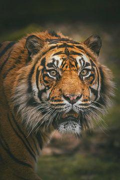 Portret van een Sumatraanse tijger van Edith Albuschat
