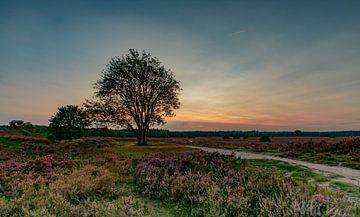 zonsondergang boven de heide von Michel Knikker