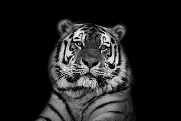 Tiger mit schwarzem Hintergrund in Schwarz-Weiß von Maria-Maaike Dijkstra