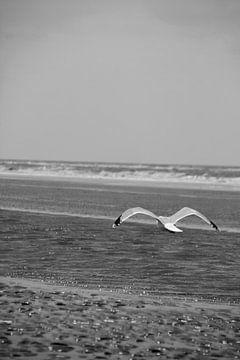 Meeuw aan de kust van Mirjam Brons