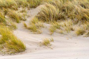 Overwoekerd zandduin van Achim Prill