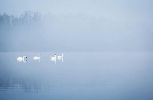 Zwanen in de mist von Jeffrey Groeneweg