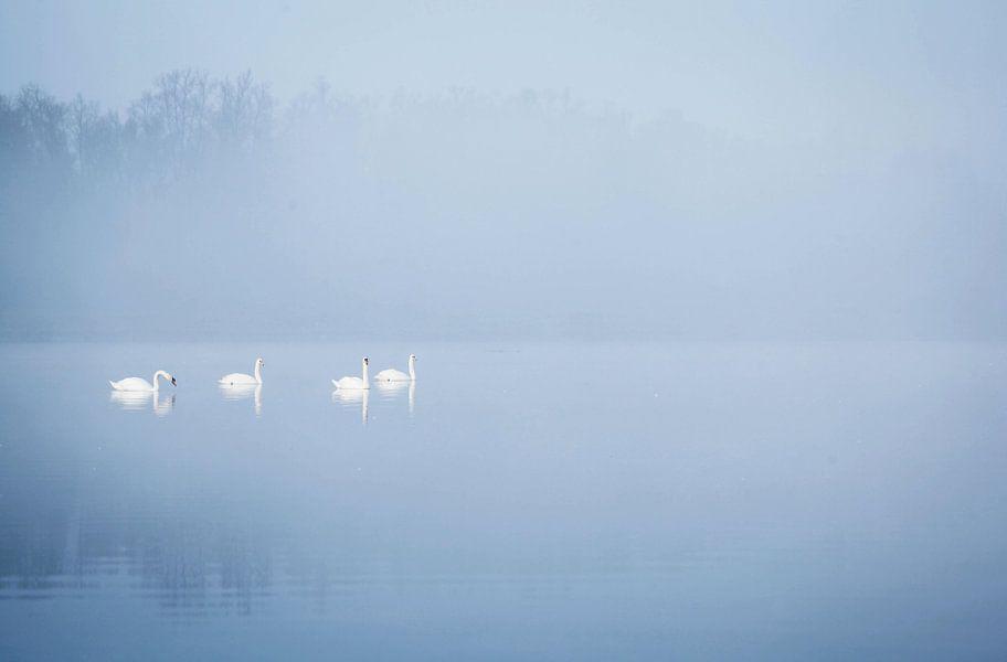 Zwanen in de mist van Jeffrey Groeneweg