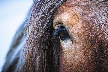 Belgisches Pferd von ton vogels