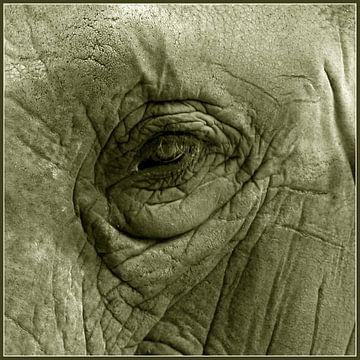 Oog in oog van Jasper van de Gein Photography
