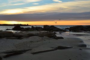 Sunset with Seagulls in Brittany