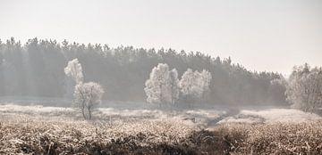 Winterse ochtend op de Veluwe van Armin Palavra