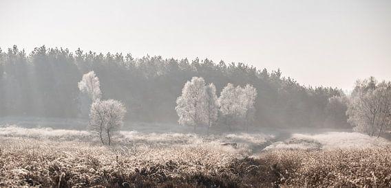 Winterse ochtend op de Veluwe