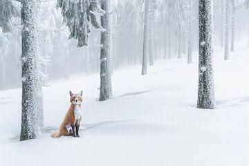 Fuchs im Schnee von Arjen Roos