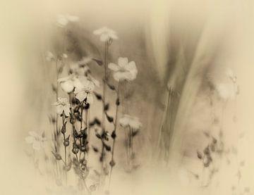 Weidebloem van Dick Jeukens
