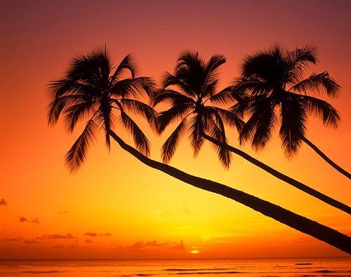Sonnenuntergang am Palmenstrand van Hans-Peter Merten