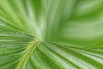 Groen blad | kamerplant van Marianne Twijnstra-Gerrits