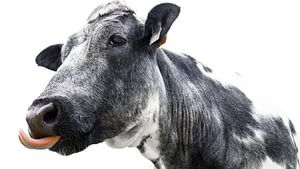 Een grappige koe van