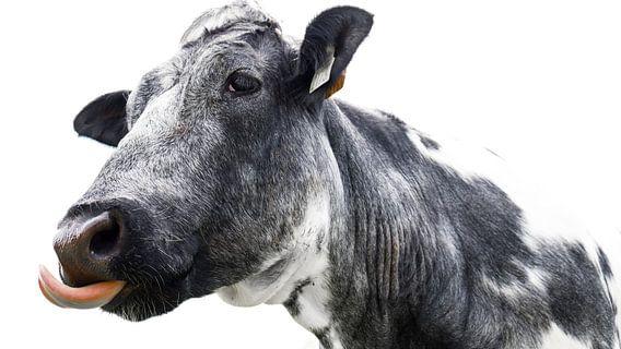 Een grappige koe