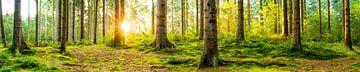Wald von Günter Albers