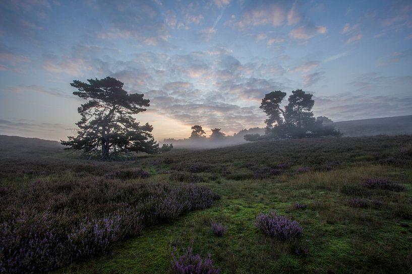 golden fog. van 3,14 Photography