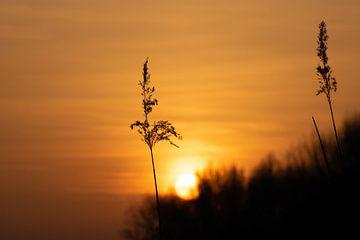 Sonnenuntergang von Martijn Diepenbach