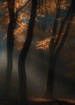 Het bos van Loulou Beavers